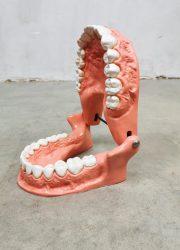 Vintage teeth anatomic body parts scale model schaalmodel anatomisch gebit