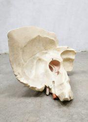 Body parts anatomic vintage scale model ear oor