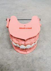 Teeth scale model anatomic vintage anatomisch schaal model gebit